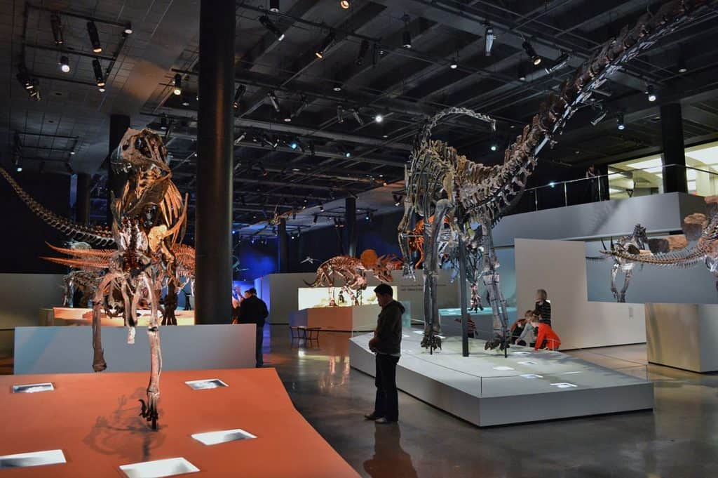 Special Exhibits At Houston Museum Of Natural Science